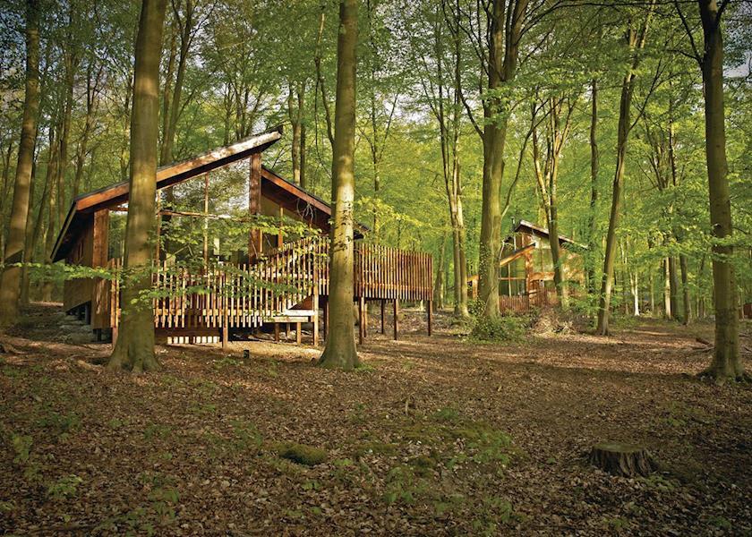 Blackwood Lodges in Hampshire