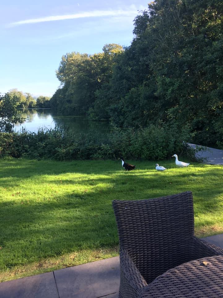 Visits from the Ducks at North Lake Lodges