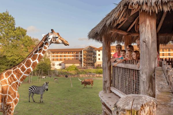 Chessington Zoo giraffe encounter