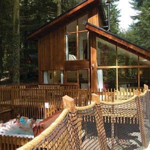 Fabulous Golden Oak Treehouse