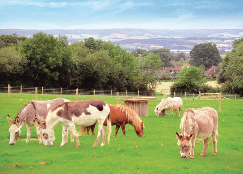 Idyllic Location at Webbers Country Park