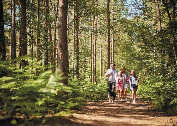 Family walking at oakdene forest
